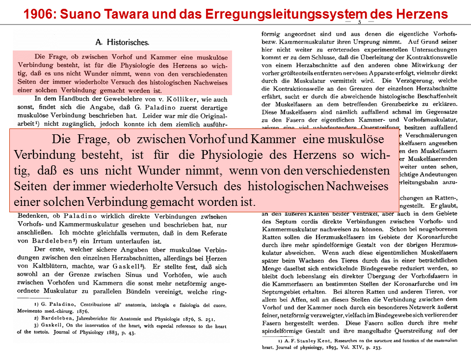 Fantastisch Grundbegriffe Der Anatomie Und Physiologie Des Herzens ...