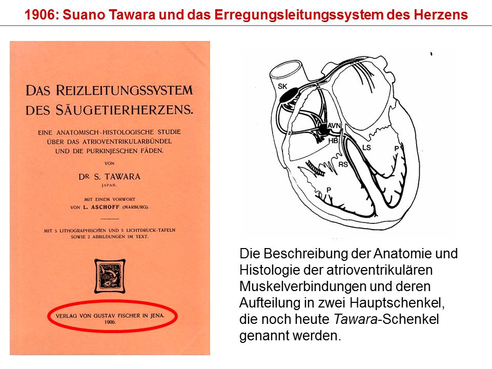 Großzügig Physiologie Des Herzens Arbeitsblatt Bilder - Mathe ...